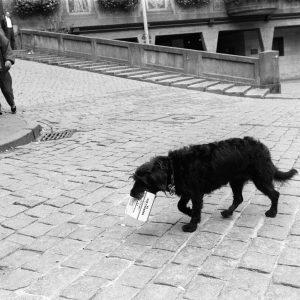 Tuebingen, Hund traegt Slipeinlagen ueber den Marktplatz 10.9.96/Bild Groebe