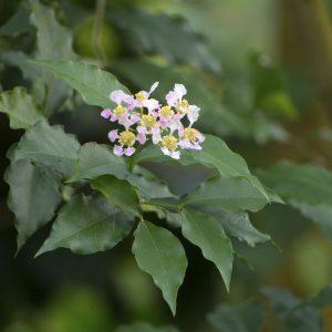 botanischergarten_21